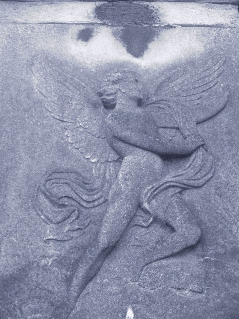 Photos d'Anges 2 Dscn3811