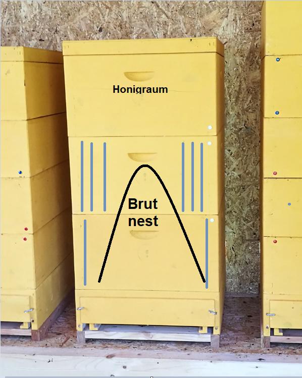 Bienen Brutra10