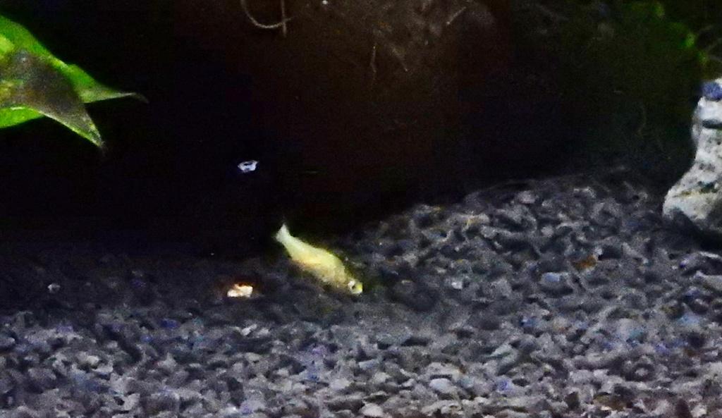 bébé poisson de mon bassin 14081911