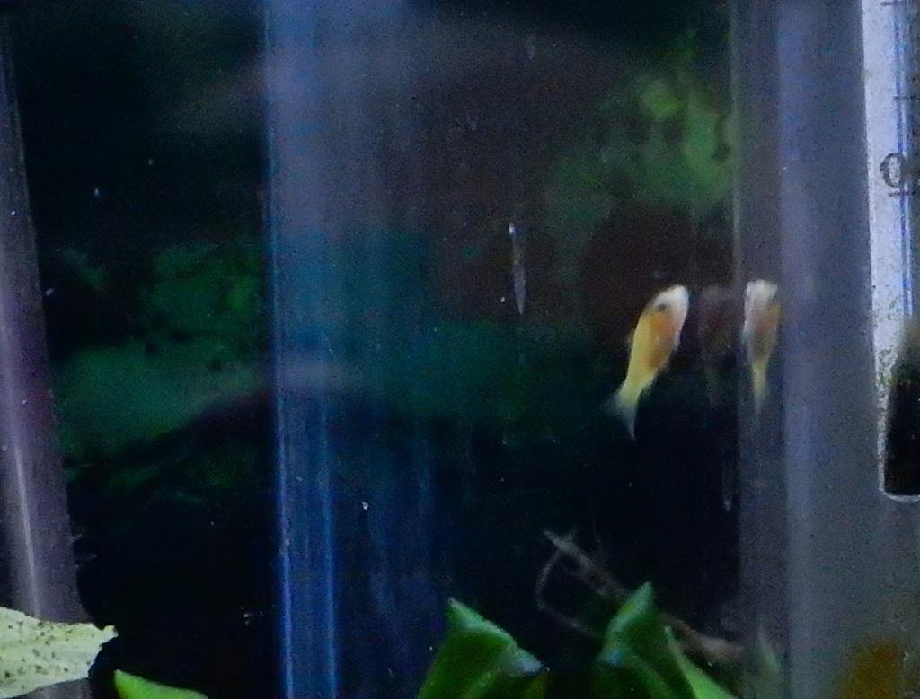 bébé poisson de mon bassin 14081912