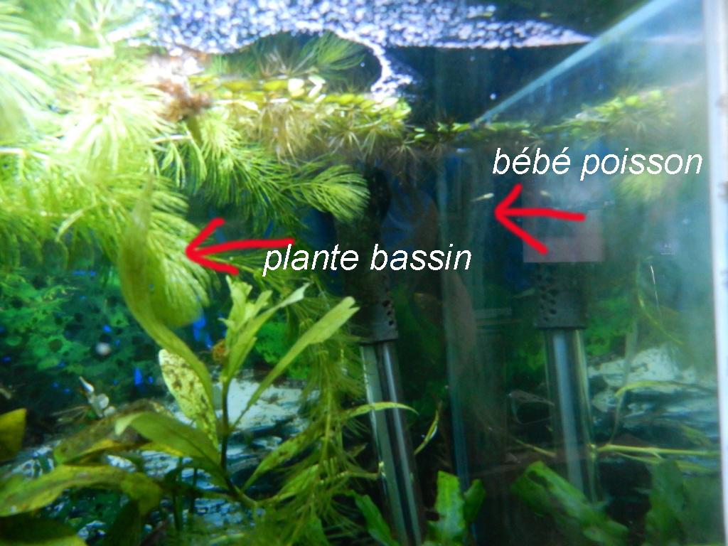 bébé poisson de mon bassin 14719d16