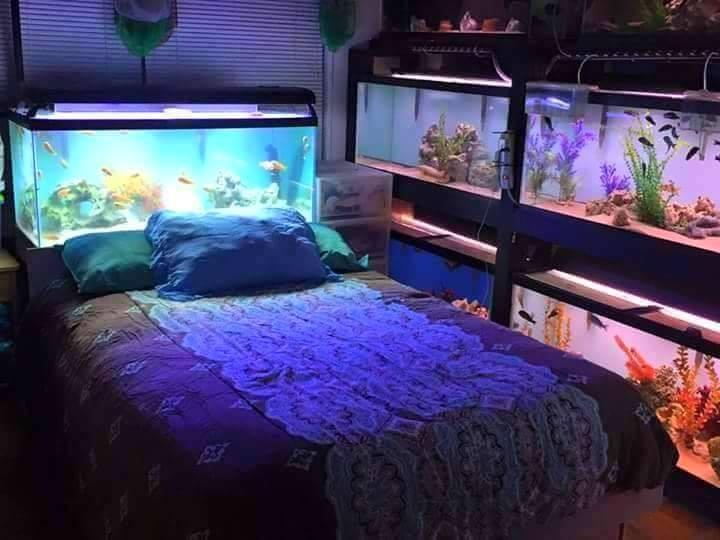 Divers créations d'aquarium 16679511