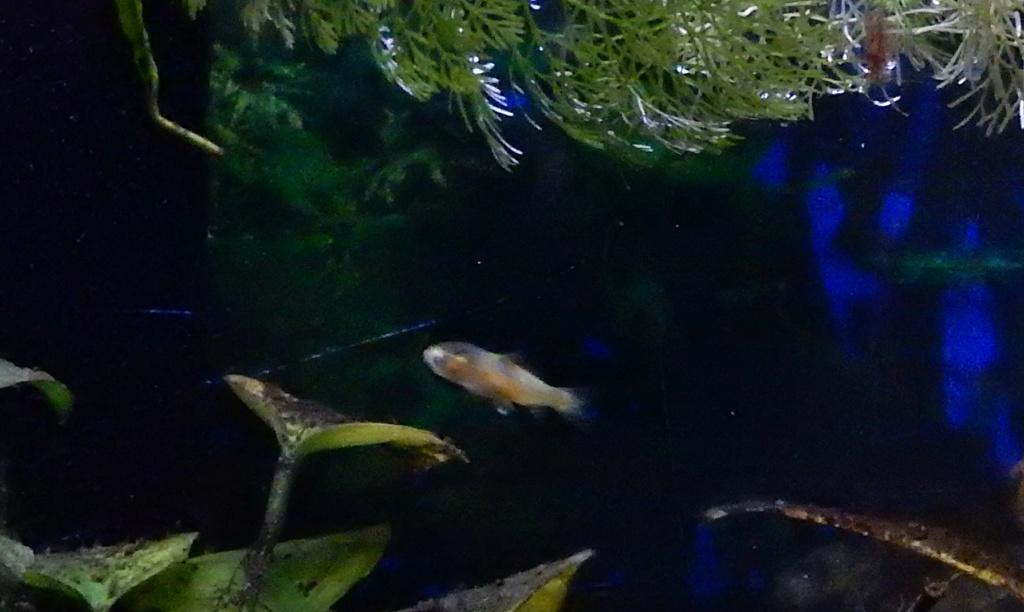 bébé poisson de mon bassin 23819d10
