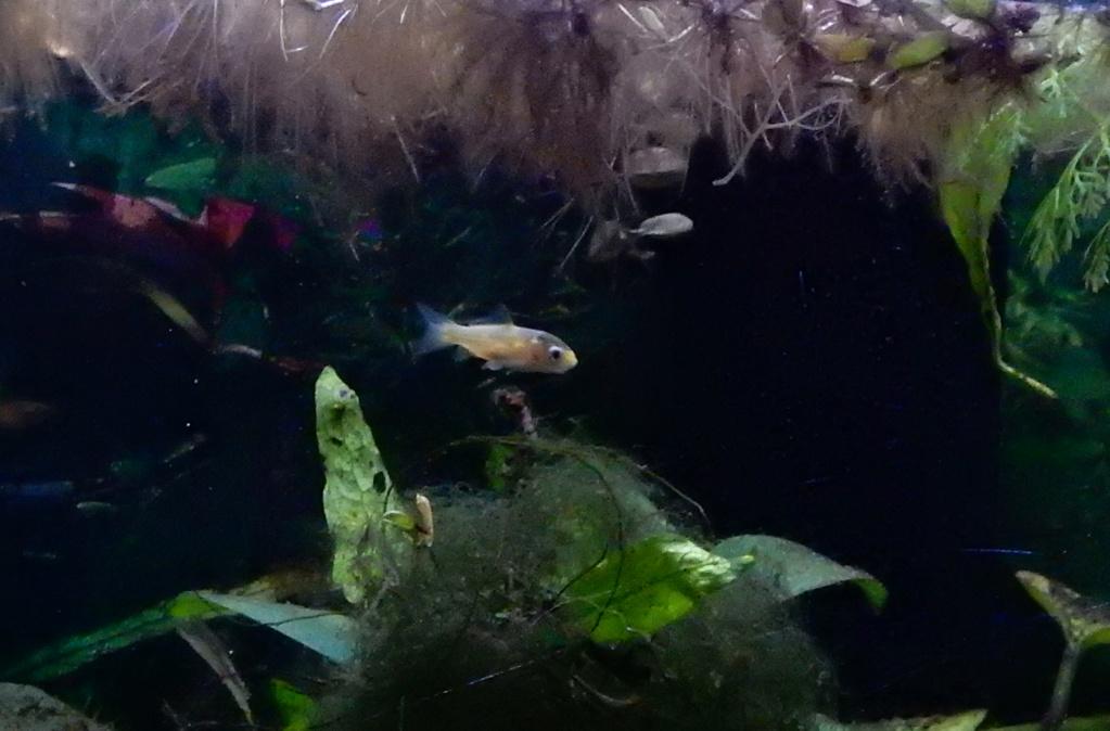 bébé poisson de mon bassin 23819d11