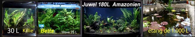 Aquarium type Amazonien 450 ou 500L Avatar12