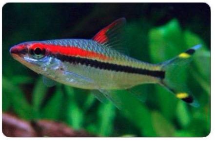 recherche nom d'un poisson  Capt1612