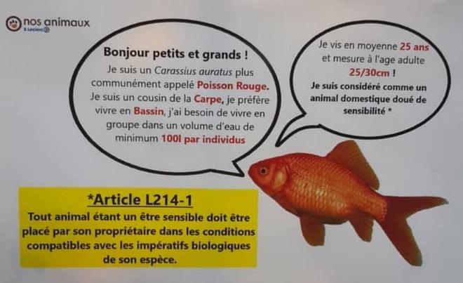 info : Poisson rouge  Capt2155