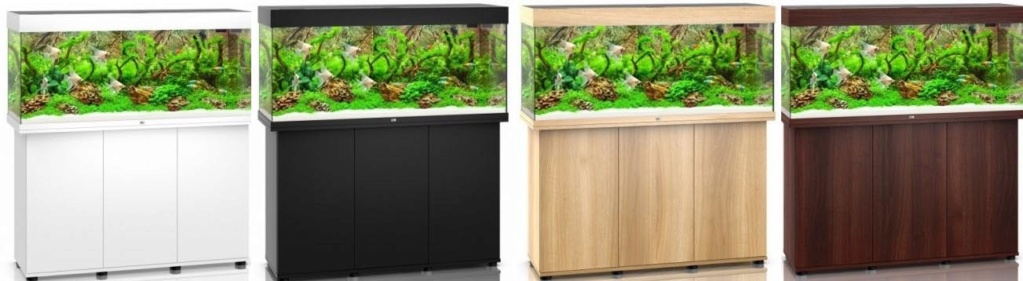 Projet aquarium amazonien Captu119