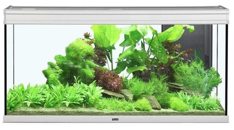 Que pensez-vous de cet aquarium ? Captu187