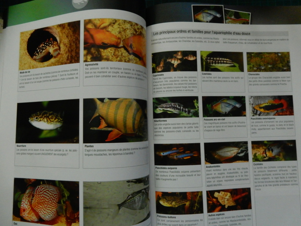 Manuel Aquarium de JBL  Dscn2825
