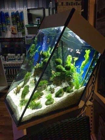 Divers créations d'aquarium Img_1314