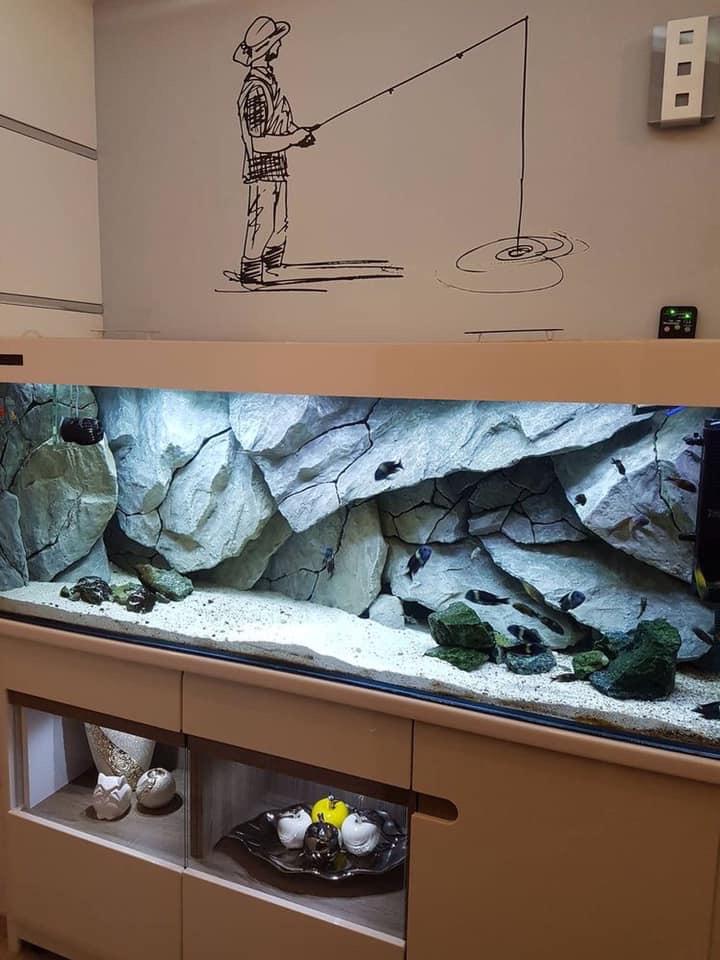 Divers créations d'aquarium Img_1316