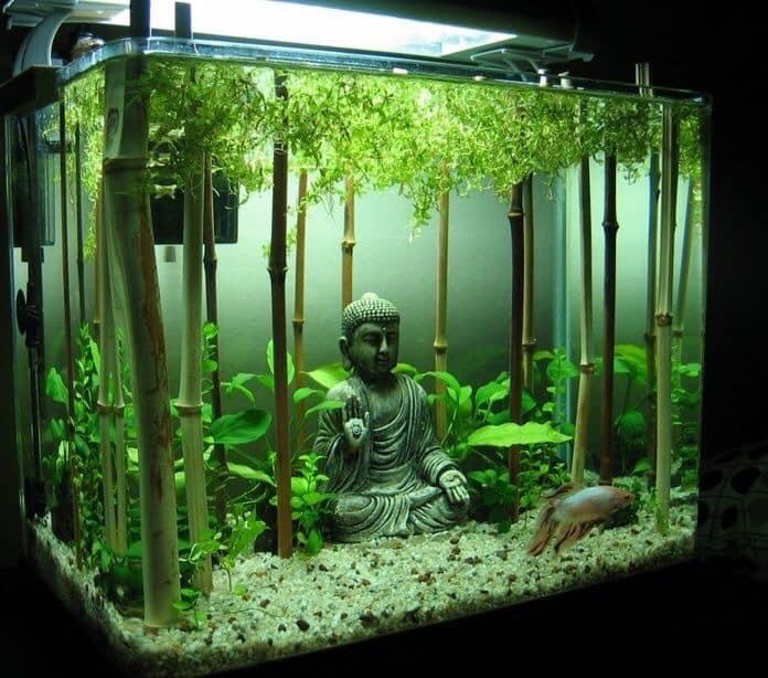 Divers créations d'aquarium Img_1318