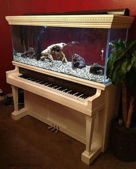 Divers créations d'aquarium Img_1319