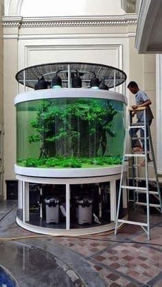 Divers créations d'aquarium Img_1320