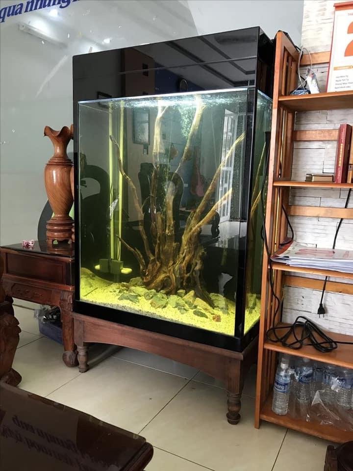 Divers créations d'aquarium Img_1322