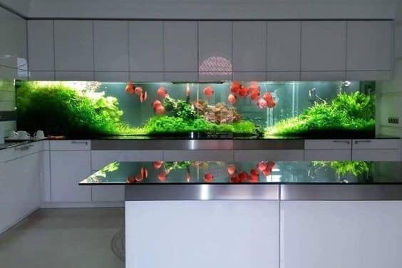 Divers créations d'aquarium Img_1323