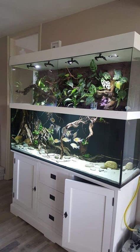 Divers créations d'aquarium Img_1324