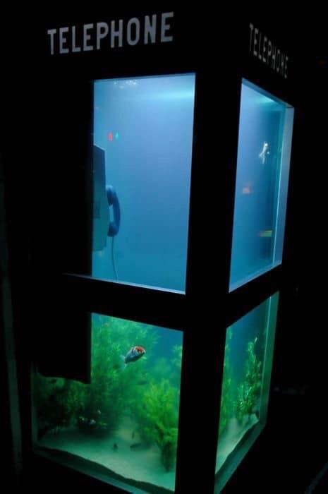 Divers créations d'aquarium Img_1326