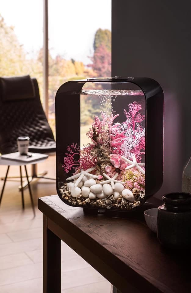 Divers créations d'aquarium Img_1333