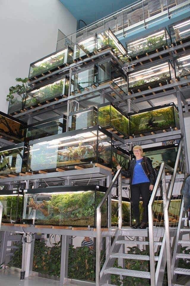 Divers créations d'aquarium Img_1334