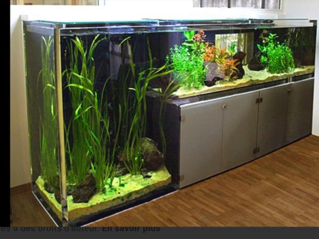 Divers créations d'aquarium Img_1859