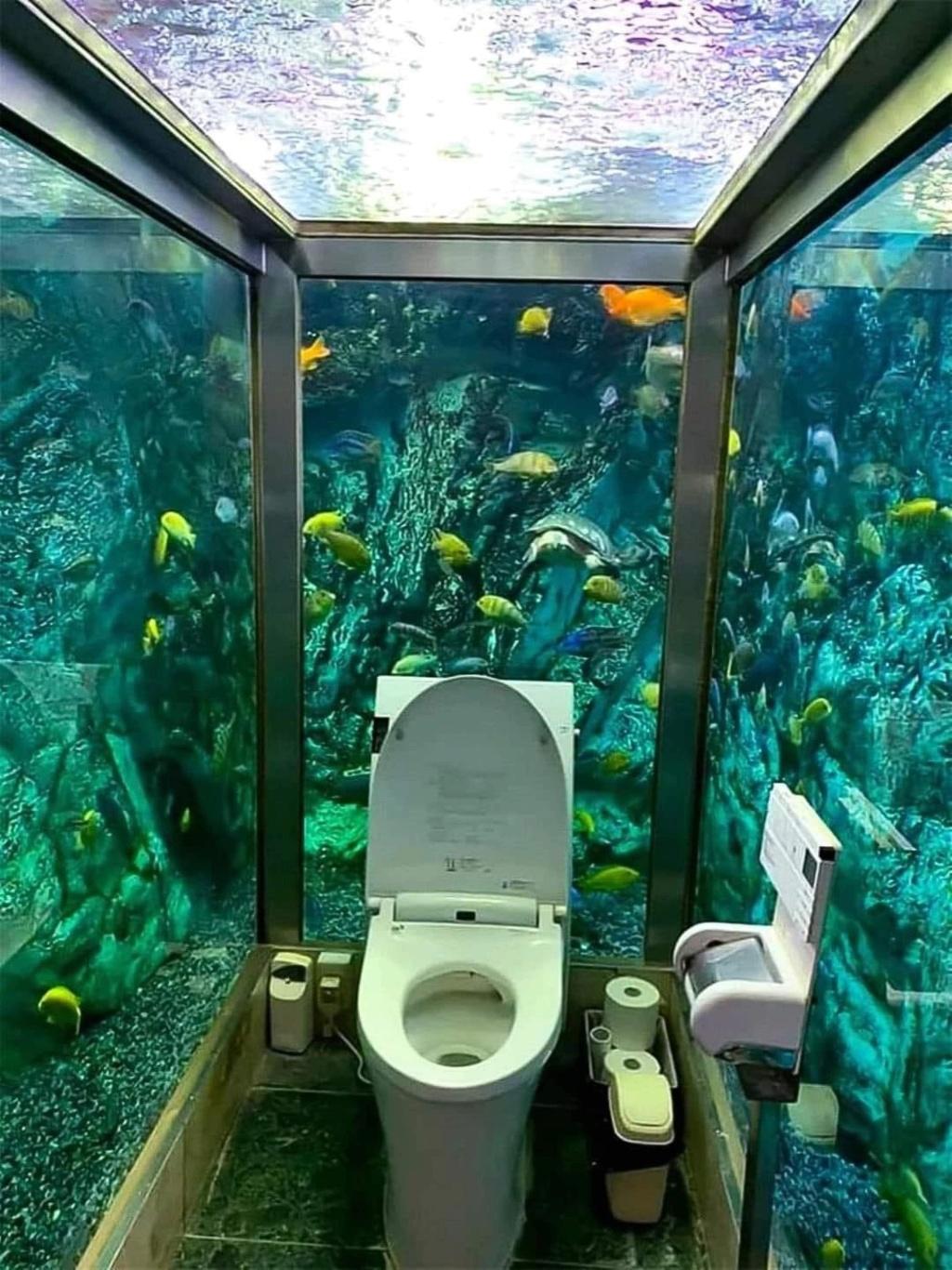 Divers créations d'aquarium Img_2818