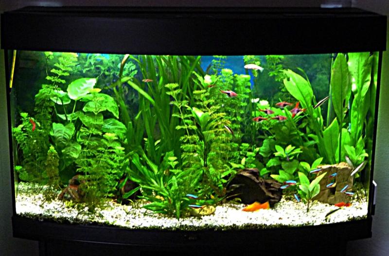 Que pensez-vous de cet aquarium ? P1080910