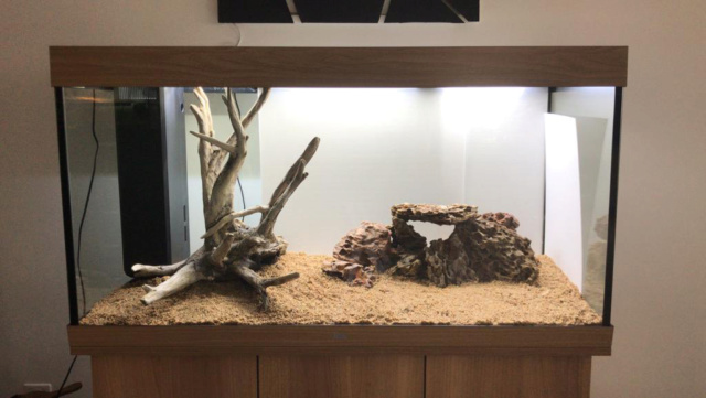 Aquarium en cour  Whatsa10