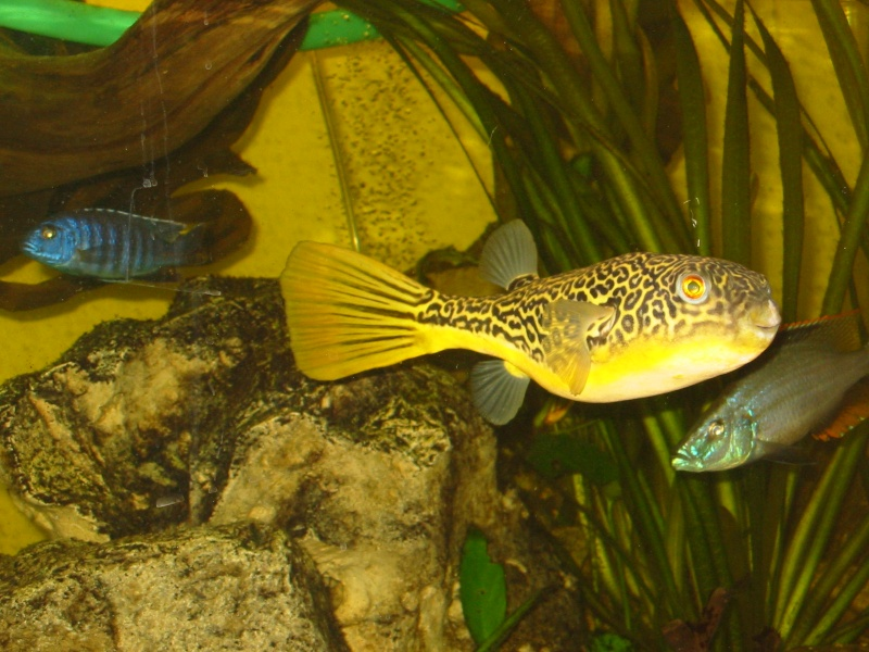 PHOTOS DES POISSONS QUE J'AI MAINTENUS Photos11