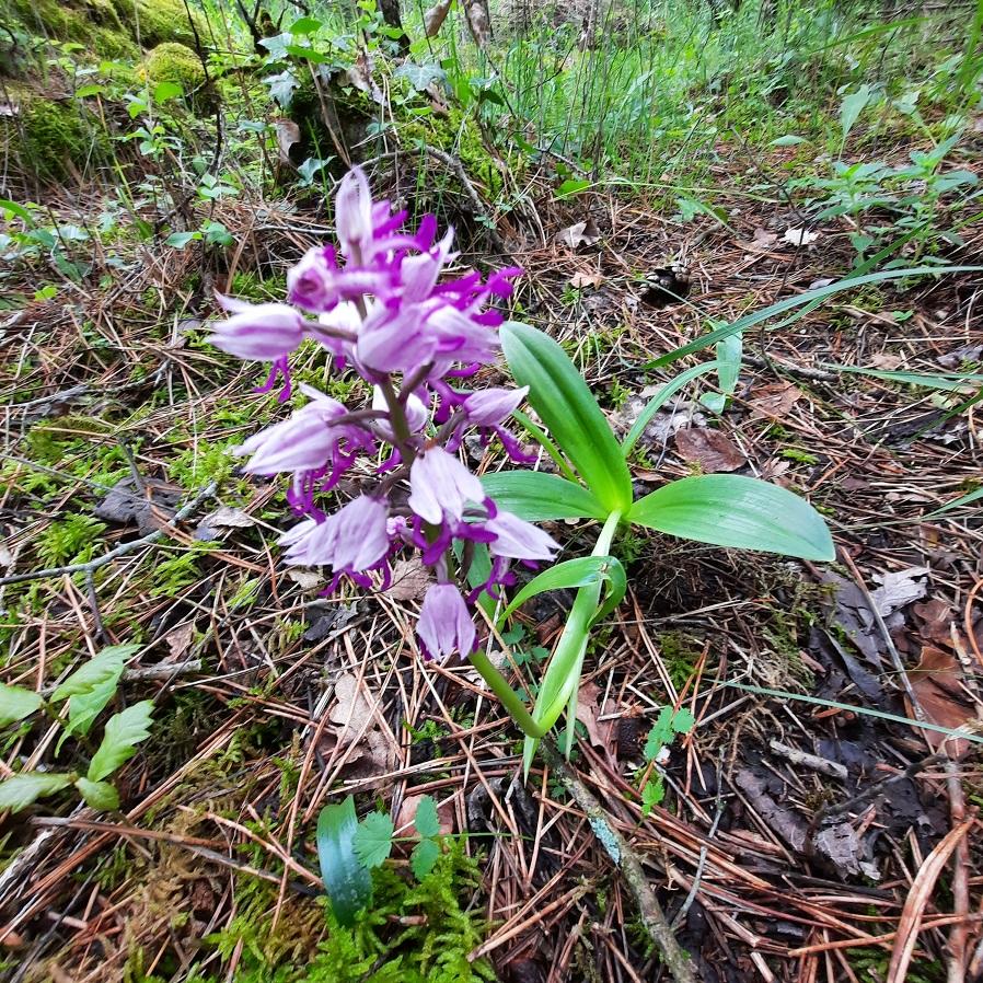 Photos orchidées - EUVILLE - 20210619