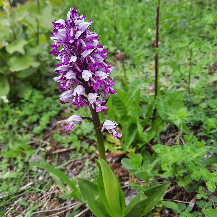 Photos orchidées - EUVILLE - 20210620