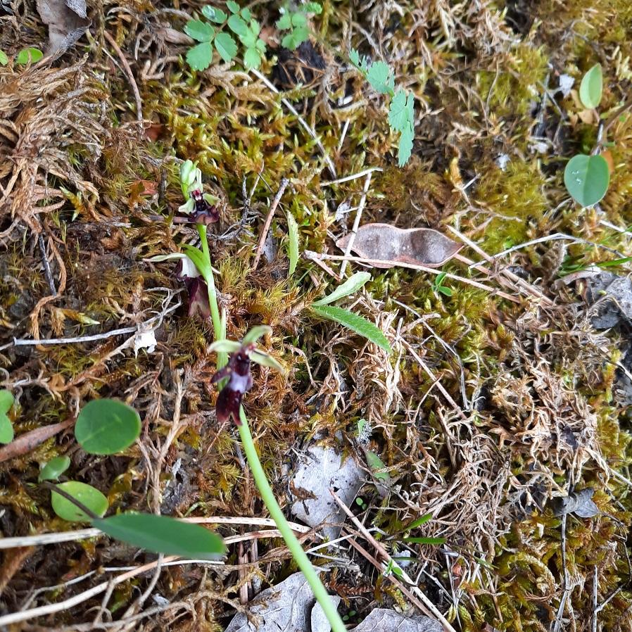 Photos orchidées - EUVILLE - 20210623