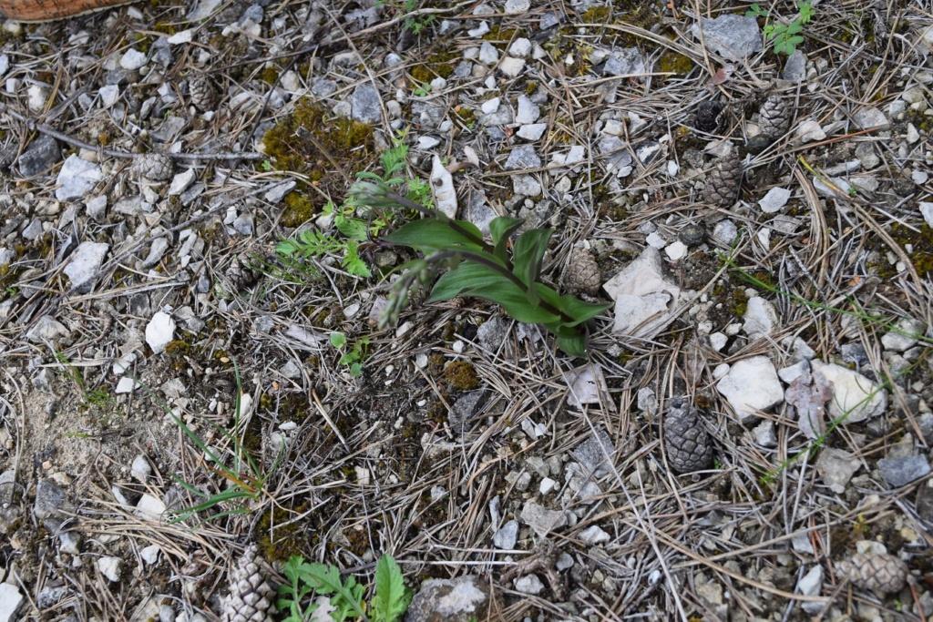 Photos orchidées - EUVILLE - Dsc_0426