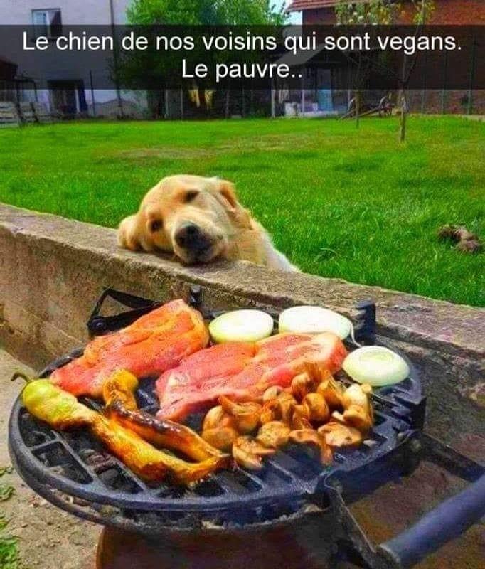 Des connaisseurs en chiens ?  - Page 5 36038310