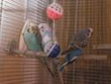 Mes petits Chéris P5150010