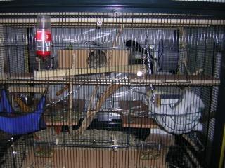 mes cages... et la pièce de vie  - Page 2 Dscn2510