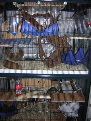 mes cages... et la pièce de vie  - Page 2 Dscn2511