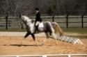 CARAÏBE  DREAM HORSE Gris1011