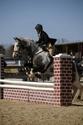 CARAÏBE  DREAM HORSE Gris1110