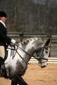 CARAÏBE  DREAM HORSE Gris2110
