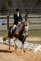 CARAÏBE  DREAM HORSE Gris4110