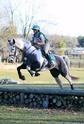 CARAÏBE  DREAM HORSE Gris5110