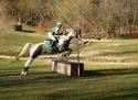 CARAÏBE  DREAM HORSE Gris6110