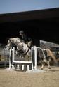 CARAÏBE  DREAM HORSE Gris9110