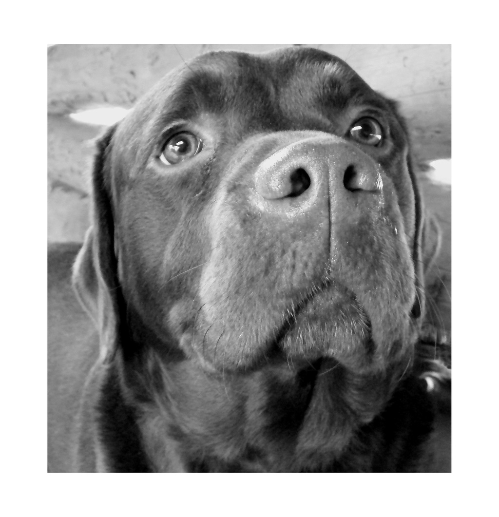 Des connaisseurs en chiens ?  - Page 3 2009_010