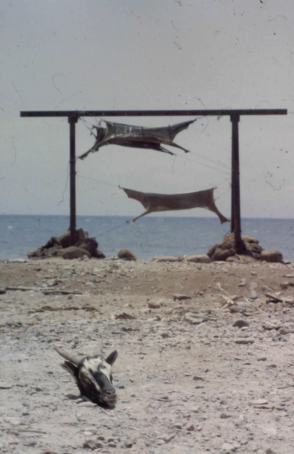 [Campagne] DJIBOUTI - TOME 1 - Page 26 20200617