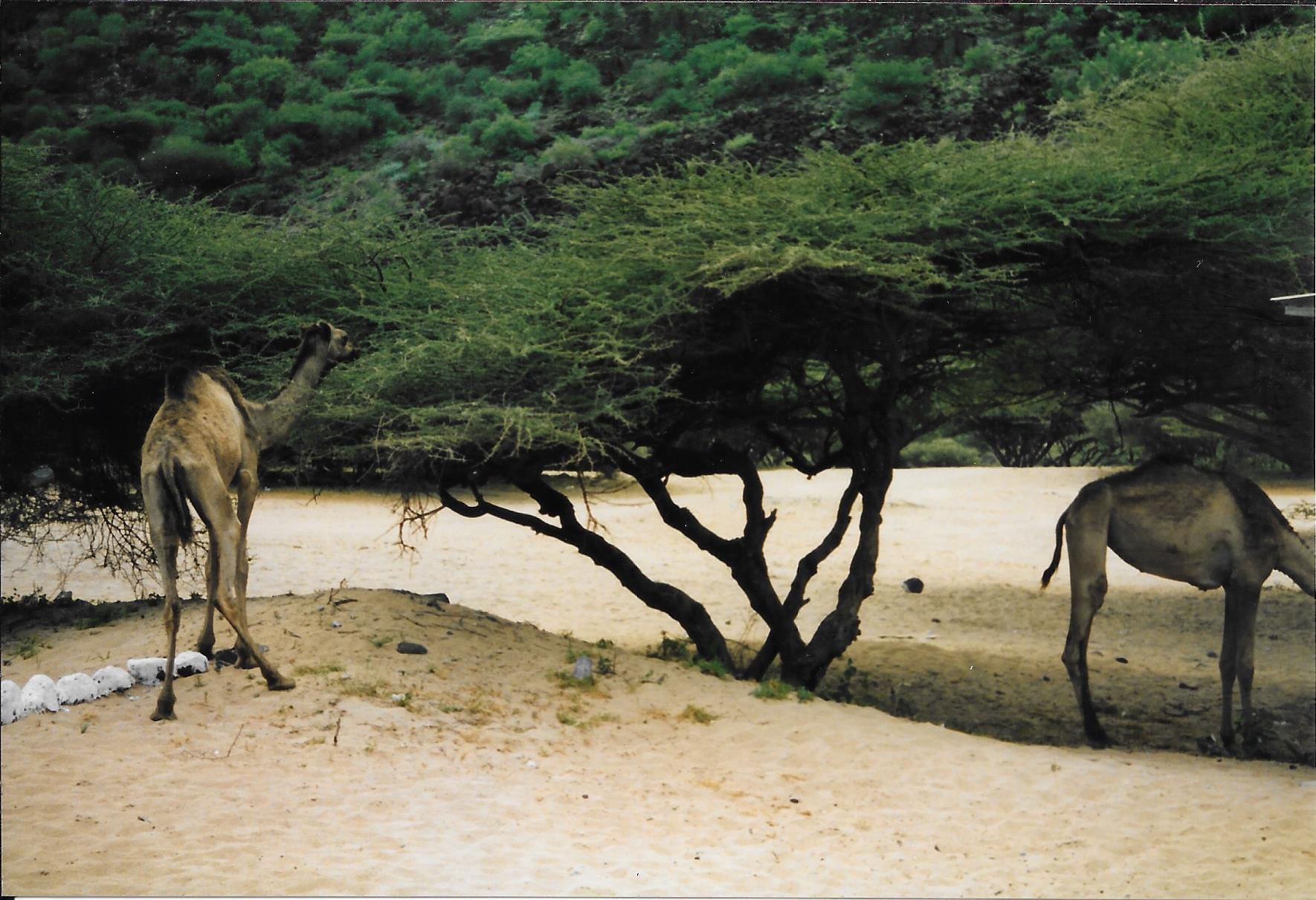 [Campagne] DJIBOUTI - TOME 1 - Page 21 313