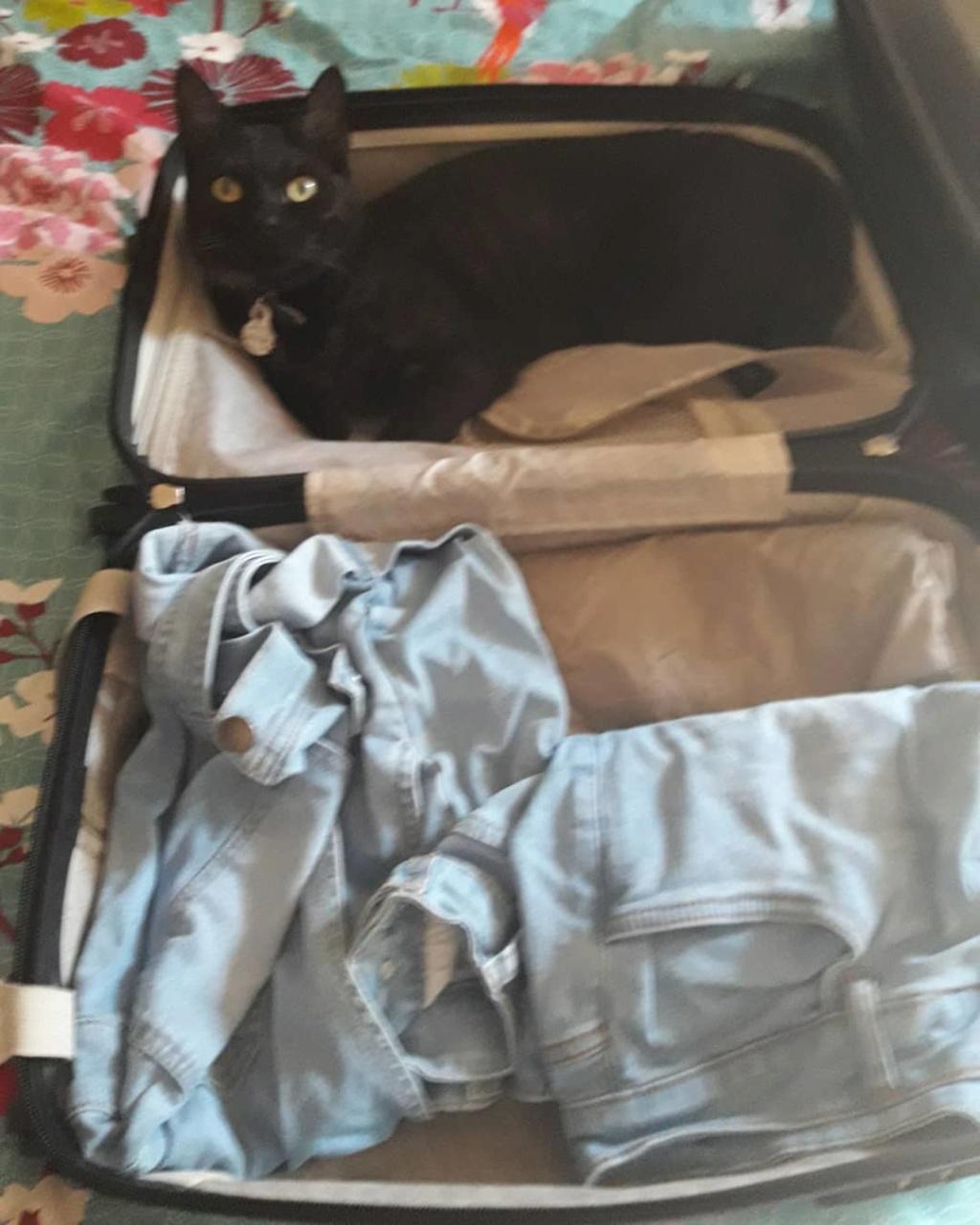 Dans ma valise il y a... - Page 7 36351910