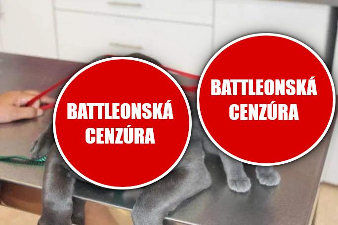 Mačka - Stránka 3 Battle17